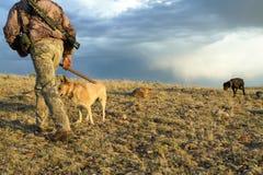 Jägare- och spårninghundkapplöpning som fotvandrar i ökenplats Arkivfoton
