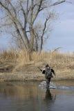 Jäger, der einen Fluss kreuzt Stockfotografie