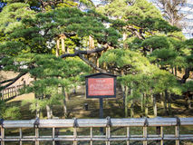 300 Jährig-Kiefer an Hamarikyu-Gärten in Tokyo, Japan Lizenzfreie Stockbilder