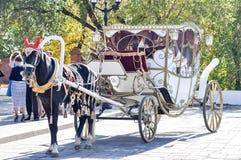 2014-jährig vom Pferd, das Pferd der Hochzeit Stockfotos