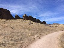 Jäkelryggrad i Longmont Colorado fotografering för bildbyråer
