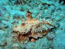 jäkelscorpionfish Royaltyfri Bild