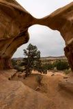 Jäkelträdgård i Utah Royaltyfri Foto