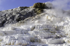 Jäkeltummen Yellowstone parkerar Royaltyfria Foton