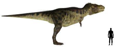 jämförelseformattyrannosaurus stock illustrationer