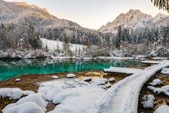 Jämlike som fylls med snö på Zelenci Royaltyfri Foto