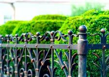 Järn förfalskat staket, smidesjärnprydnader, horisontalfoto, utrymme för kopia, royaltyfri bild