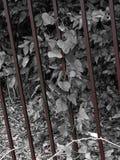 Järn med elfenben Fotografering för Bildbyråer