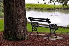Järn parkerar bänken under ett träd bredvid en sjö Arkivbilder
