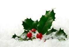 Järnek i snowen Arkivfoton