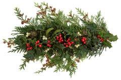 Järnek-, murgröna-, mistletoe- och cederträLeaves royaltyfri fotografi