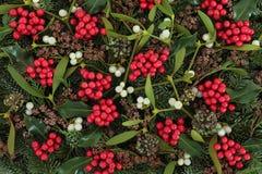 Järnek och mistletoe Royaltyfri Bild