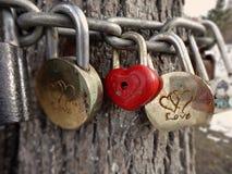 Järnlås hänger på kedjor runt om trädstammen som ett symbol av förälskelse arkivbild