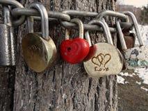 Järnlås hänger på kedjor runt om trädstammen som ett symbol av förälskelse royaltyfria bilder