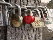 Järnlås hänger på kedjor runt om trädstammen som ett symbol av förälskelse arkivfoto