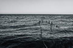 Järnpelare klibbar ut från havet, och från dem sträcker repet till kusten bw som tonar Royaltyfri Fotografi