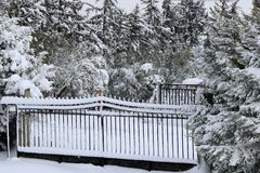 Järnportar och granträd som täckas i snö för ligganderussia för 33c januari ural vinter temperatur arkivbilder