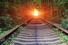 Järnväg i djup skog royaltyfria bilder