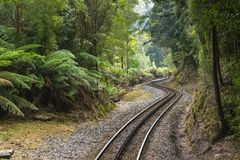 Järnväg i regnskogen Royaltyfria Foton