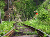 Järnväg i skog Arkivfoto