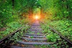 Järnväg i skog royaltyfri foto