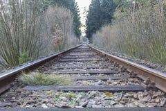Järnväg i skog Royaltyfri Bild