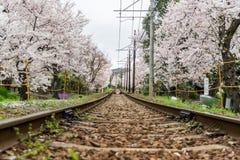 Järnväg och sakura träd Arkivbild