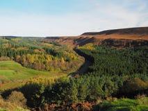 Järnväg spolning dess väg till och med en skogsbevuxen dal Arkivbild