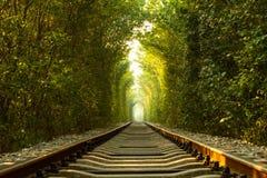 Järnväg tunnel av träd Arkivfoton