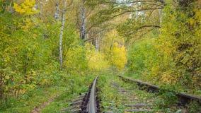 Järnvägen kör till och med den härliga färgrika höstskoghösten Fotografering för Bildbyråer