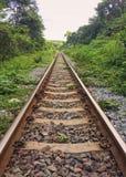 Järnvägnatur och skogar Arkivfoto