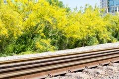 Järnvägspår och ljusa gula blom Arkivfoto