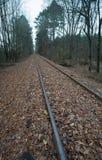 Järnvägspår som leder till en försvinnapunkt i en skog Arkivbilder