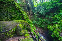 Jätte- ödla i den sakrala apaskogen, Ubud, Bali, Indonesien royaltyfria bilder