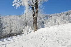 Jätte- berg/Karkonosze, Karpacz vinter Royaltyfria Foton