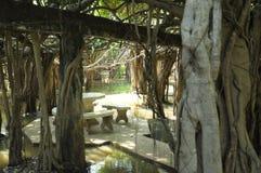 Jätte- dunge för banyanträd i Thailand Royaltyfri Bild