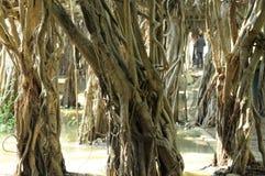 Jätte- dunge för banyanträd i Thailand Fotografering för Bildbyråer