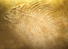 Jätte- fiskfossil Arkivfoton