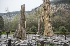 Jätte- ginkgofossil i Changxing nationellt geologiskt parkerar, Zhejiang royaltyfria bilder