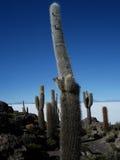 Jätte- kaktus Royaltyfri Fotografi