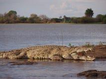 jätte- kenya mara för africa krokodil masai Arkivfoto