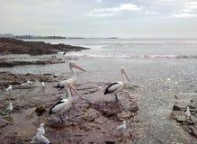 Jätte- pelikan på stranden Royaltyfri Bild