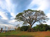 Jätte Raintree Royaltyfri Fotografi