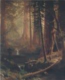 Jätte- redwoodträdskog Royaltyfri Fotografi