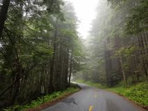 Jätte- redwoodträdträd längs avenyn av jättarna Royaltyfria Foton