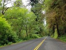 Jätte- redwoodträdträd längs avenyn av jättarna Royaltyfria Bilder