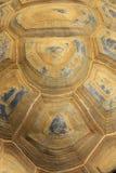 jätte- skalsköldpadda royaltyfria foton