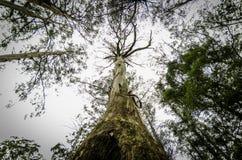Jätte- träd royaltyfri fotografi