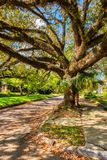 Jätte- träd i gata i mobila Alabama royaltyfria foton