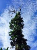 Jätte- träd@ sjö Holon Fotografering för Bildbyråer